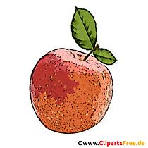 Piersică cu frunze verzi Clipart, Imagine, Desene animate
