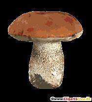 Ciupercă PNG transparent - Imagini de toamnă