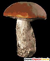 Ciuperci Porcini PNG Clipart transparent - Imagini de toamnă gratuite