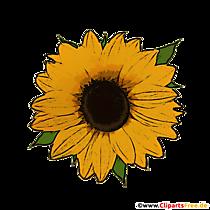 Floarea-soarelui clipart transparentă toamna
