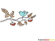 Vogelbeere Bild - Bilder Herbst