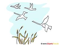 Vogelmigratiebeeld, klemkunst, illustratie