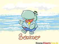 無料夏の壁紙、カバ