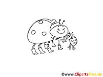 Clipart siyah beyaz ladybugs, böcekler