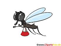 Clip art con papillon, foto, illustrazioni