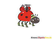 Käfer Comic, Cartoon, Clipart, Bild, Zeichnung, Illustration gratis