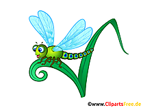 Libelle, Wasserjungfer, Augenstecher Bild, Clip Art, Illustration