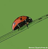 La coccinelle rampe sur le style d'une fleur clipart, illustration, image