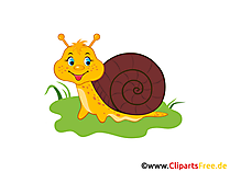 Schnecke Bild, Clip Art, Illustration, Grafik gratis