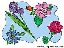 クリップアートの花