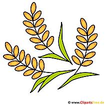 Konfirmation Cliparts kostenlos - Getreide Bild