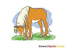 Bilder Pferd