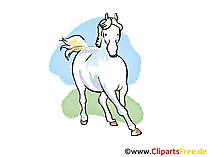 Clip Bilder Pferde