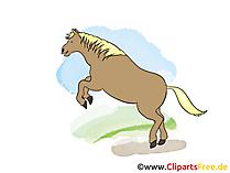 Free Bitmaps Pferde