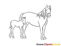 Getekende paardenfoto's