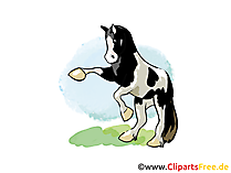 Gratis foto's van paarden