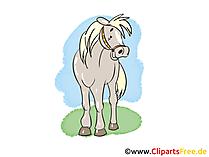 Pferde Bilder kostenlos
