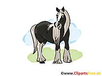 Pferdebild gratis
