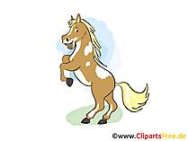 無料で馬の写真