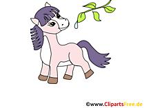 Schoene Pferde Bilder