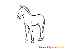 Zeichnung Pferd