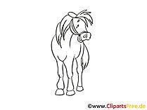 黒と白の馬を描く