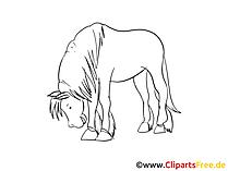 Zeichnungen Pferde