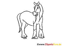 Zeichnungen von Pferden