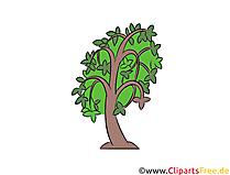 Baum Clipart, Illustration, Bild kostenlos