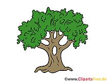 樫の木、木のクリップアート、イラスト、無料画像