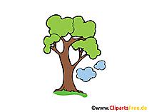 Eiche Clipart, Bild, Grafik, Cartoon, Zeichnung gratis