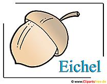 Eichel Clipart Bild kostenlos