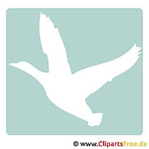 Duck clipart gratis
