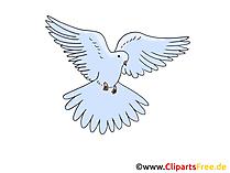 Bild Taube zu Pfingsten