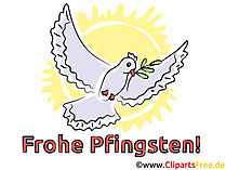 Vogel Bild Pfingsten