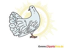 Weiße Taube Symbol, Bild, Clip Art, Image