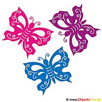 Bunte Schmetterlinge Bild - Sommer Bilder gratis