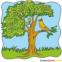Kostenlose Bilder zum Sommer - Baum Clipart