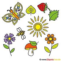 Sommer Bilder gratis - Pilz, Sonne, Erdbeere, Blume, Biene
