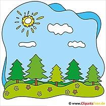 Tannen Clipart - Lizenzfreie und kostenlose Bilder zum Sommer