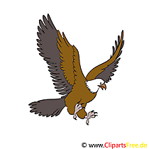 Adler Cartoon, Bild, Illustration, Clip Art