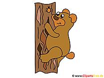 画像ベアは木に登る
