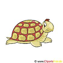 Clipart Bibliotheek Dieren in de dierentuin - schildpad