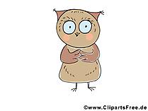 Eule Bild-Clipart - lustige Tierbilder gratis