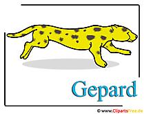 Cheetah afbeelding illustraties gratis