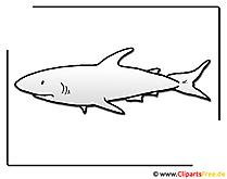 サメのクリップアート無料の海洋動物