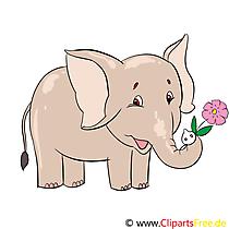Little Elephant Illustration, Clip Art, Image, E-card