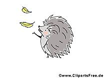 Kostenlose lustige Tierbilder - Igel Bild