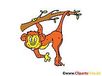 Monkey clip art, image, cartoon, cartoon gratis