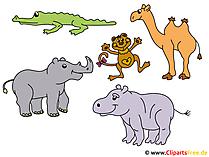 Safari-cartoons